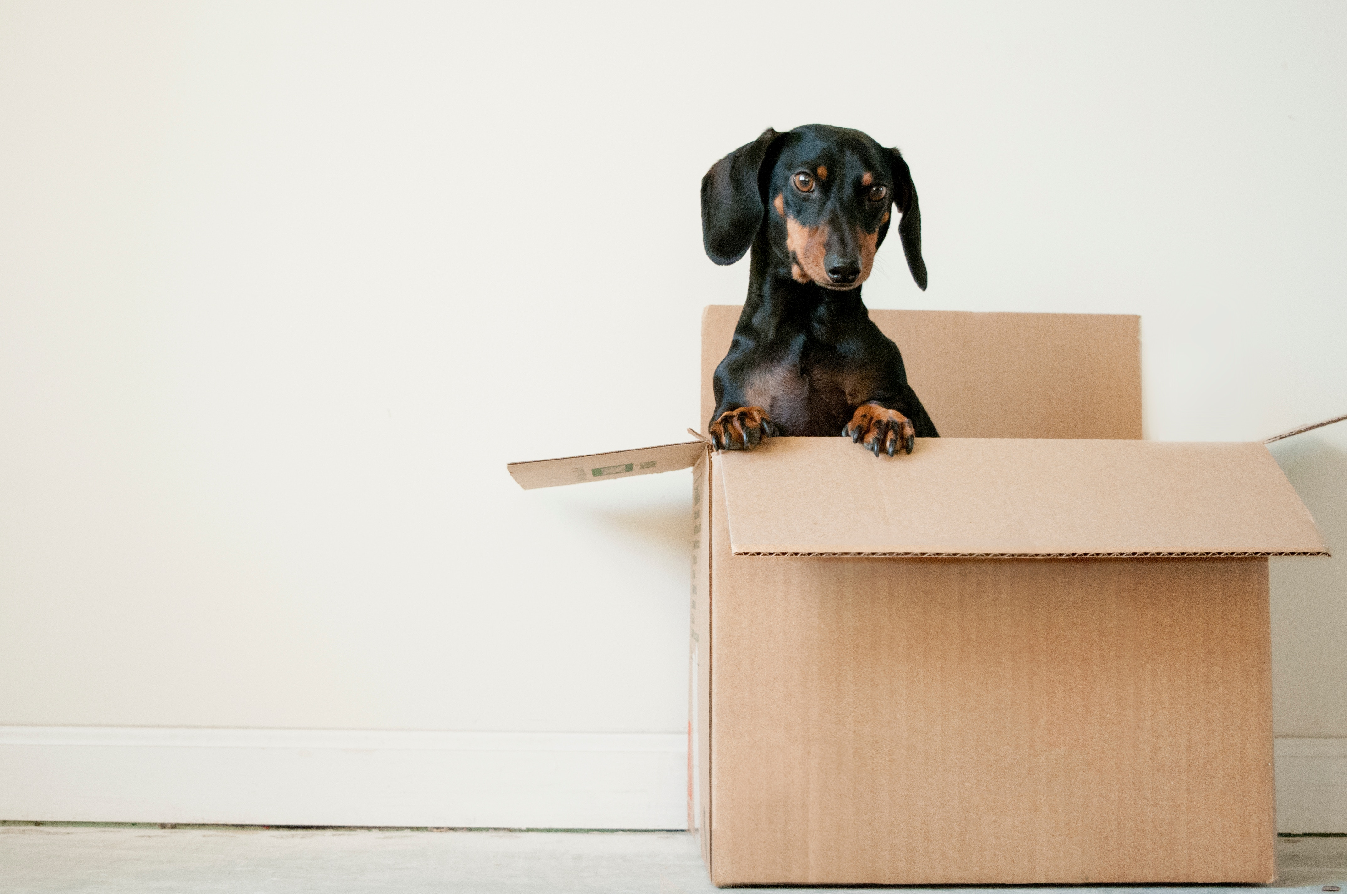 10 Ways To Save Money on Moving (And Make It Suck Less)